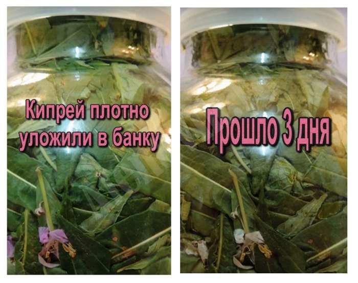 Сравнение цвета чая до укладки в банку и после трех дней